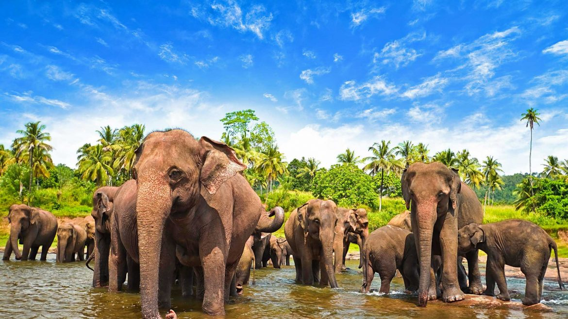 Sri Lanka Amazing Wildlife and the Top National Parks to Visit